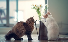 Cats Flowers