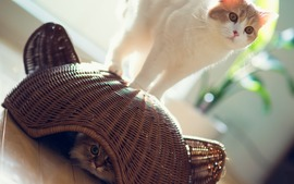 Lovely Cat Picture
