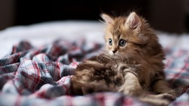 Lovely Kitten 1920x1080