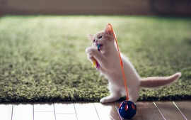 Lovely Kitten Playing Toy