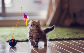 Lovely Kitten Playing