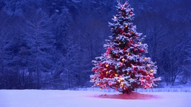 Beautiful Christmas Tree Picture