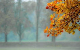 Autumn Free Images