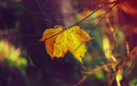 Autumn Free Wallpapers
