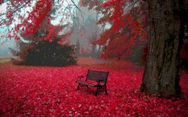 Autumn Leaves Free Wallpapers