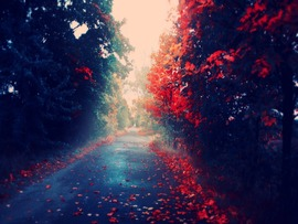 Autumn Leaves Road