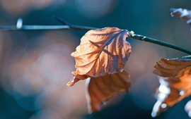 Beautiful Autumn Leaves Pictures