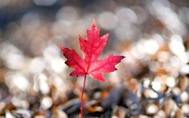 Leaf Beautiful Wallpapers