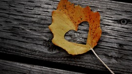 Maple Leaf Pictures