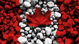 Maple Leaves Canada