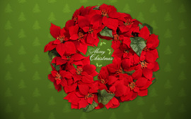 Christmas Wreaths Photos