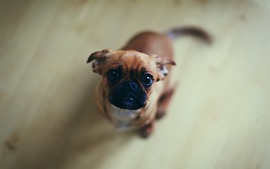 Dog Picture