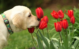 Dogs Flowers