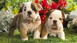 Puppies Images