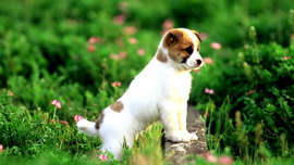 Puppies Lovely