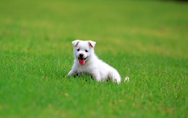 Puppy Backgrounds