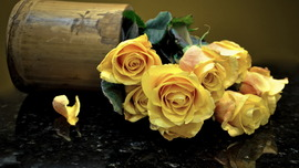 Yellow Roses HD