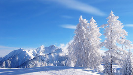 Winter Picture