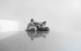 Cat Desktop Wallpapers