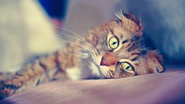 Cats Full HD Wallpapers