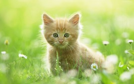 Kitty Backgrounds