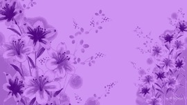 Lavender Colour Wallpaper