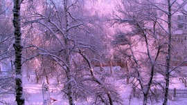 Lavender Winter