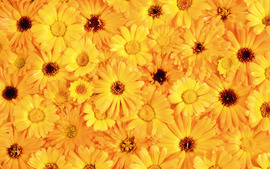 Yellow Color Wallpaper