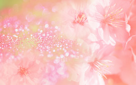 Pink Color Wide Wallpaper