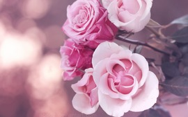 Pink Pic