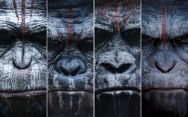 Dawn of the Planet of the Apes (2014) Movie