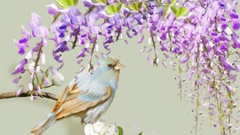 Wisteria Wallpapers