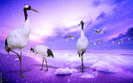 Red Crowned Cranes Japan