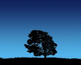Tree On Blue Sky