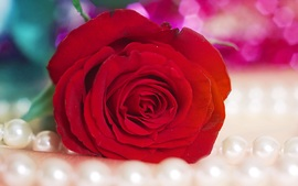Red Rose Backgrounds