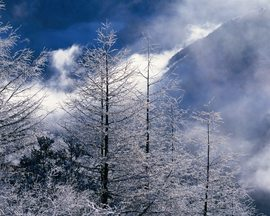 Beautiful Winter Landscapes