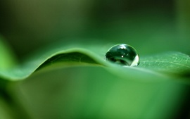 Green Dew Drop