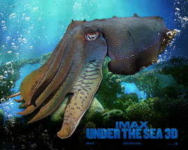 Imax Under The Sea Wallpaper
