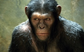 Rise Of The Planet Of The Apes Movie