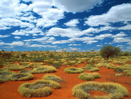 Old Spinifex Rings Little Sandy Desert Australia
