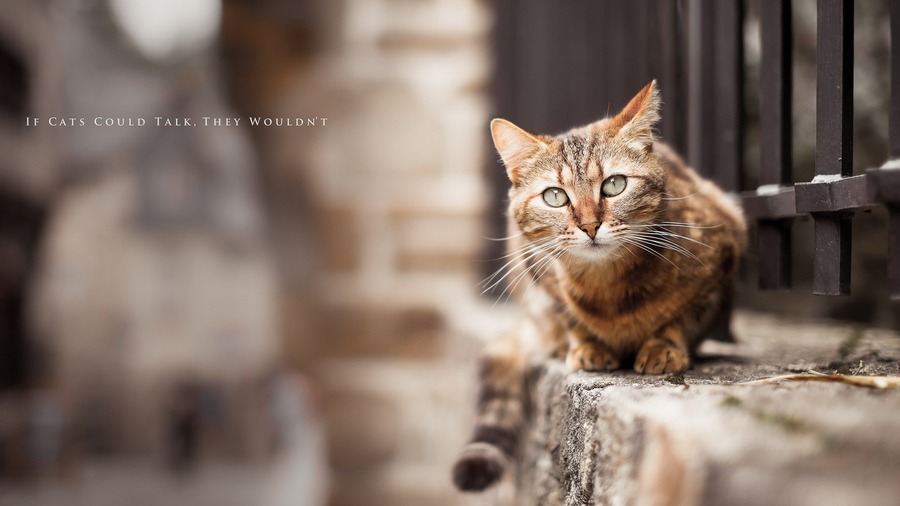 Beautiful Cat Photo