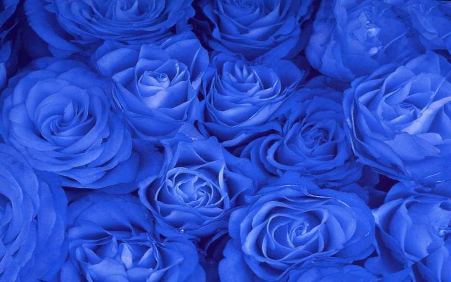 Gm Wallpaper With Love : Blue Roses Desktop Wallpaper - Wallpaper, High Definition, High Quality, Widescreen