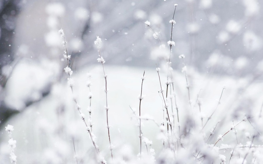 Snow Wide Wallpapers