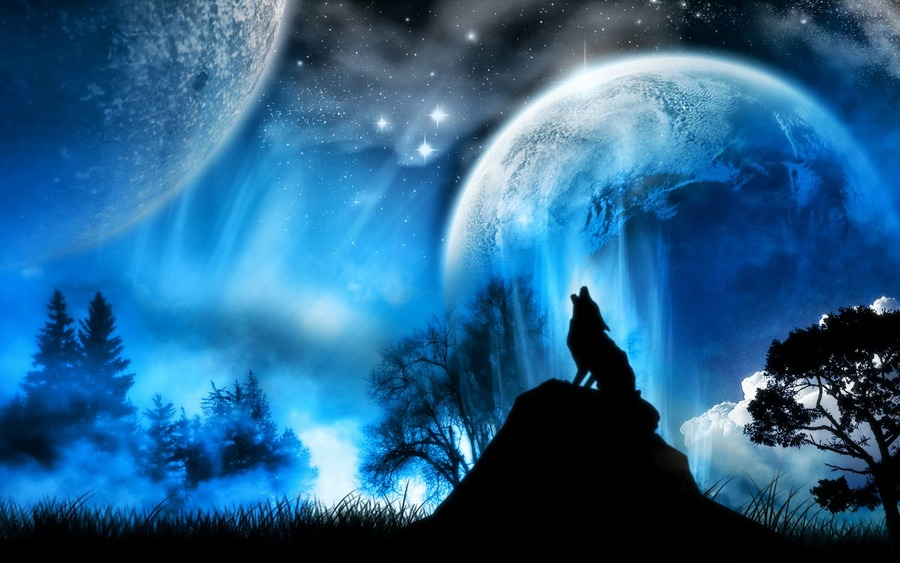 winter wolf wallpaper high definition high quality