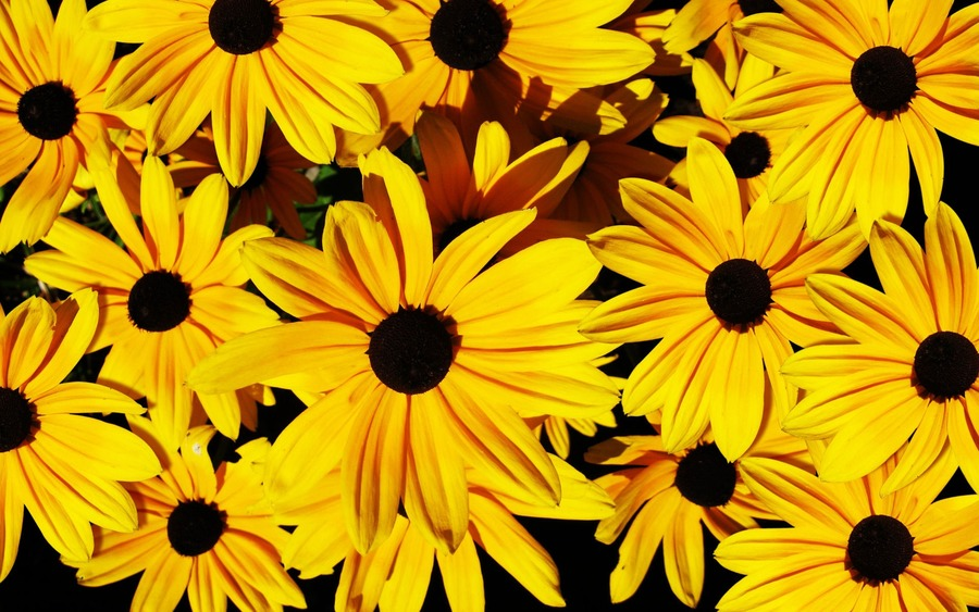 Yellow Flowers Backgrounds