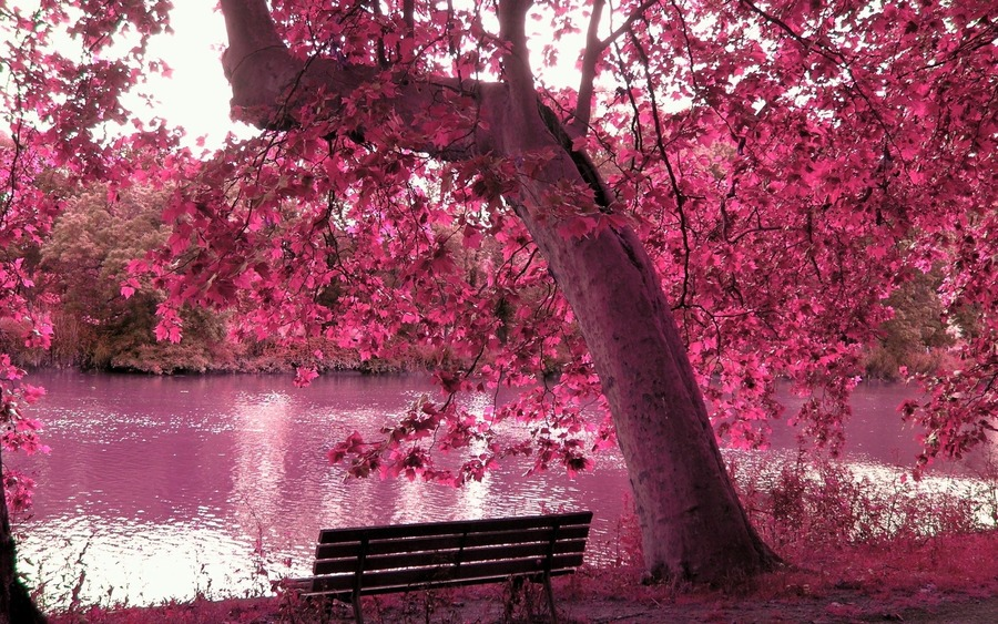 Pink Pictures