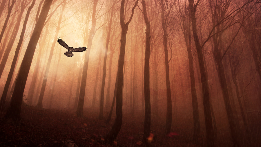 Owl Forest