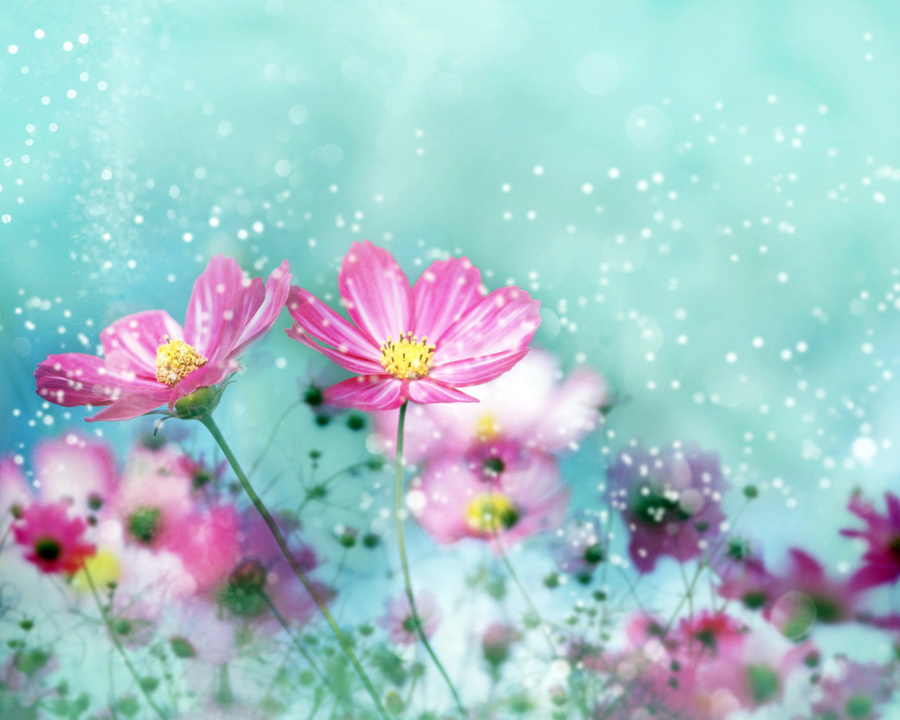 Colorful Flower Blossoms