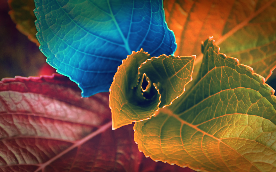 Colors Of Leaves