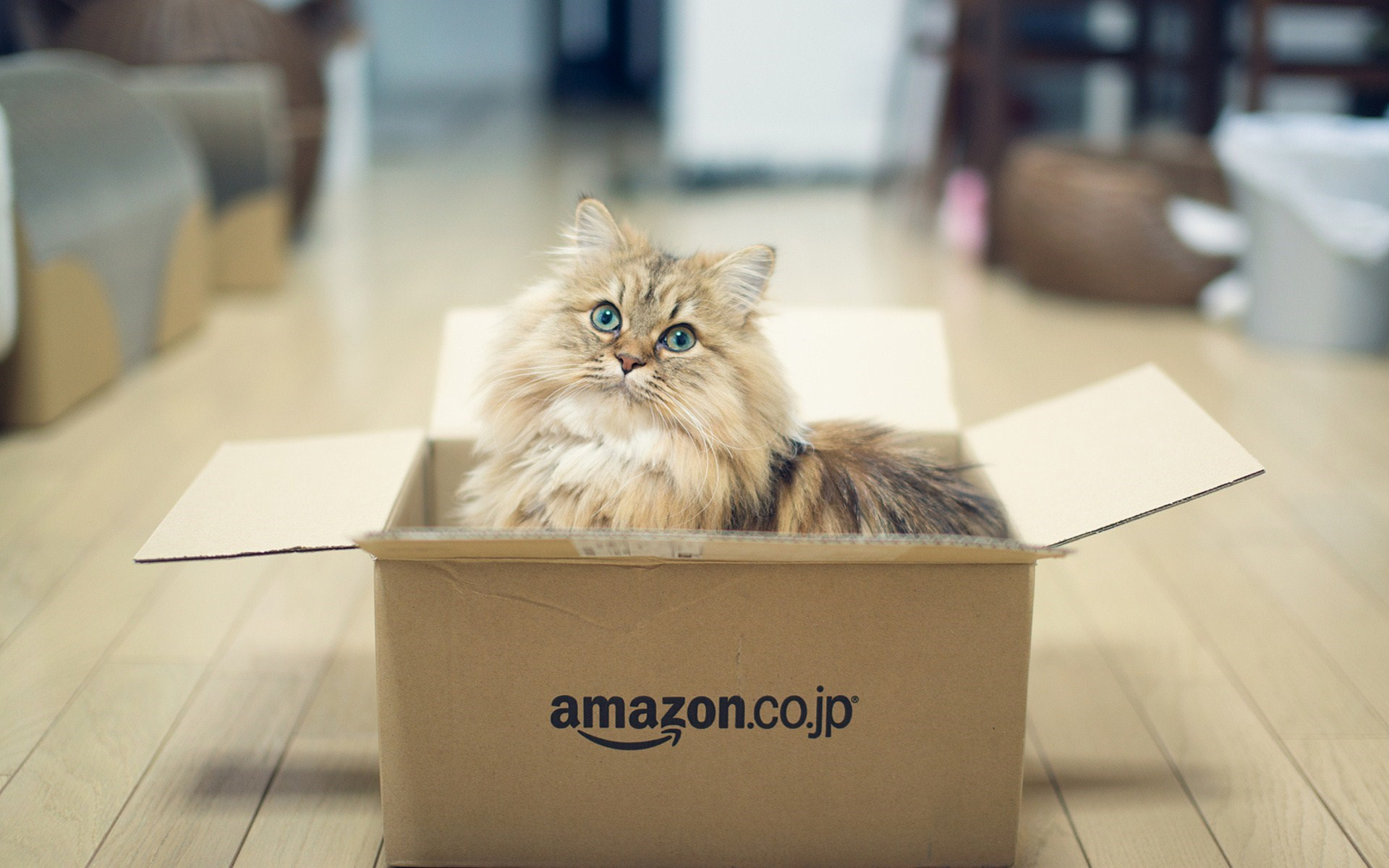 cat in box wallpaper high definition high quality widescreen. Black Bedroom Furniture Sets. Home Design Ideas